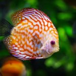 Establishing your Tropical Fish Aquarium
